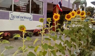 อพาร์ทเม้นท์พร้อมเฟอร์นิเจอร์ 2900 นนทบุรี ปากเกร็ด บางตลาด
