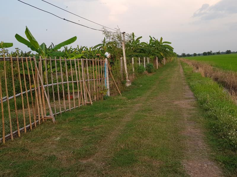 ไร่สวน 6000 ปทุมธานี คลองหลวง คลองห้า