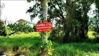 ที่ดิน 11500000 นนทบุรี ปากเกร็ด บางตะไนย์