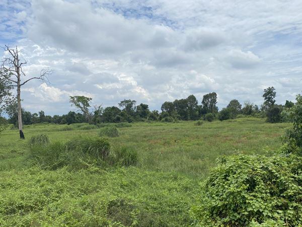 ที่ดิน 1500000 ฉะเชิงเทรา แปลงยาว หัวสำโรง