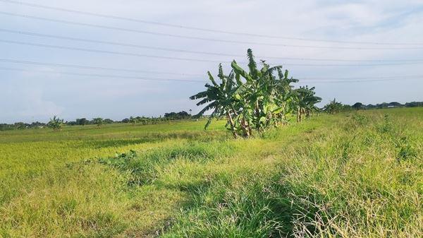 ที่ดิน 2400000 กรุงเทพมหานคร เขตหนองจอก คลองสิบสอง