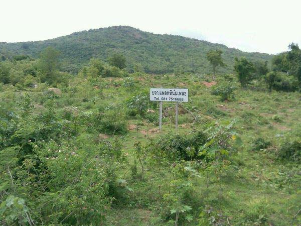 ที่ดิน 1200000 ประจวบคีรีขันธ์ ปราณบุรี ปราณบุรี
