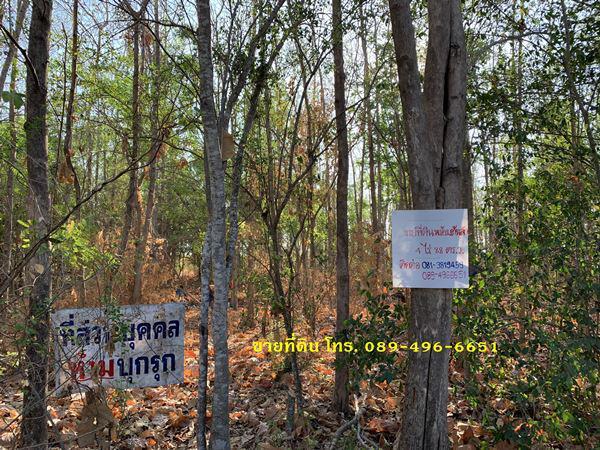 ที่ดิน 2532000 เพชรบูรณ์ วิเชียรบุรี พุขาม