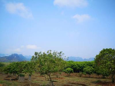 ที่ดิน 380000 กาญจนบุรี ทองผาภูมิ ท่าขนุน